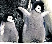 Pingviinien matka (La Marche de l'empereur)